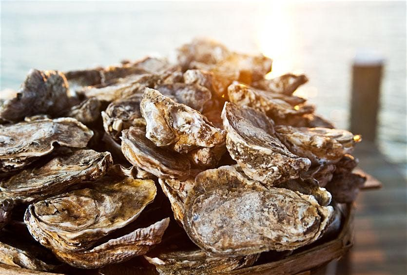 Chesapeake Bay oysters at Sip + Savor weekend Cambridge MD